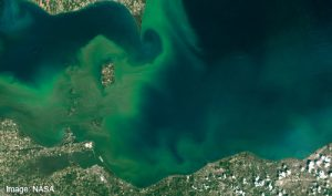 Detroit river phosphorus build up glowing green amongst blue water, visible from the atmosphere.